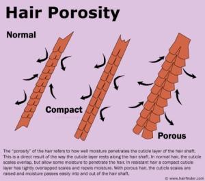 hairporosity
